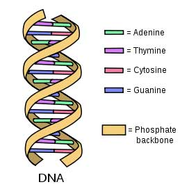 Differences between dna replication and transcription difference