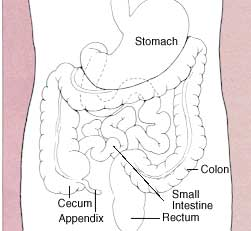 human-digestive-system1