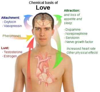 chemical-basis-love-300