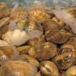 Difference Between Mussels and Clams-1