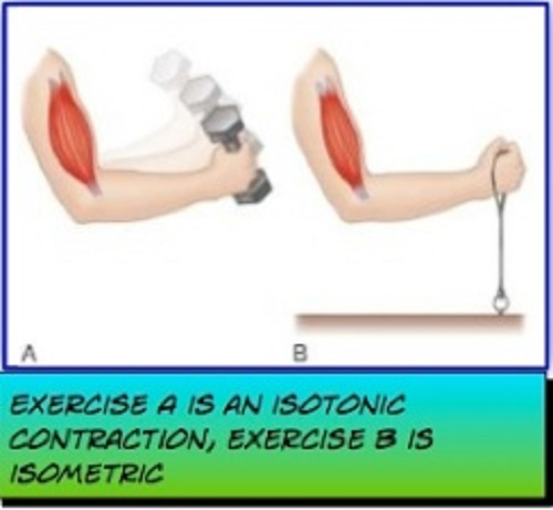 Difference between isometric and isotonic contractionsDifference between isometric and isotonic contractions