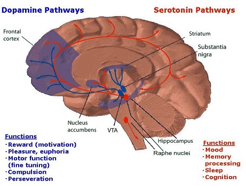 Difference between Serotonin and Dopamine