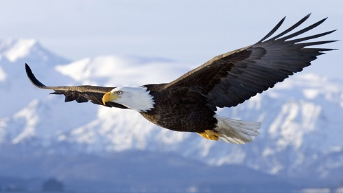 Difference Between Eagle and Kite