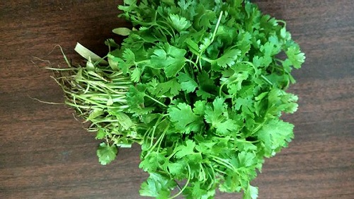 Difference Between Parsley and Coriander-1