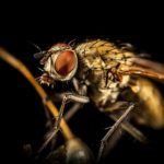 Difference Between Pest and Insect